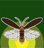 picture of fireflies  - firefly vector illustration clip - JPG
