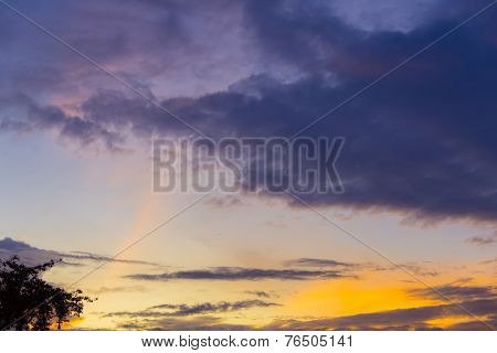 Twilight Sky With Tree In Sunset Time