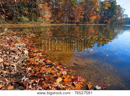 Leaf Lined Shore