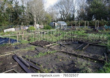 Allotments In Autumn