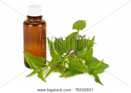 Stinging Nettles With Medicine Bottle