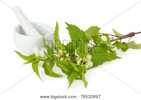 Stinging Nettle With Mortar