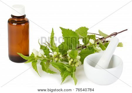 Stinging Nettle With Medicine Bottle And Mortar