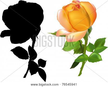 illustration with dark yellow rose isolated on white background