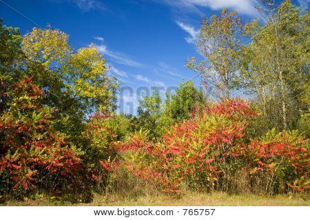 Autumn Senic View