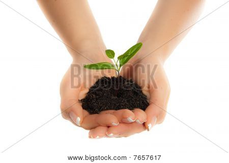 Woman hands holding plant