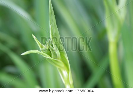 Green Grass Leaf Outdoors