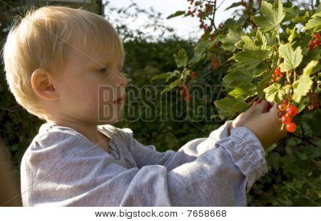 Child picking berries
