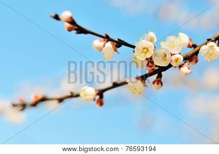 Fresh Blossom