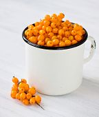 picture of sea-buckthorn  - Sea buckthorn gathered in a white mug  - JPG