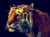 stock photo of tigers-eye  - Low poly design - JPG