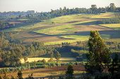pic of ethiopia  - Patchwork of farms and forest in rural Ethiopia - JPG