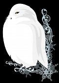 stock photo of snowy owl  - white snowy owl bird sitting among snowflakes  - JPG