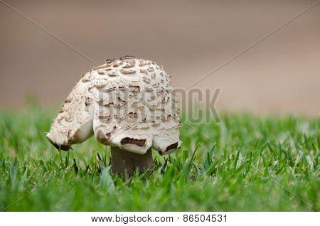 Backdropped Mushroom