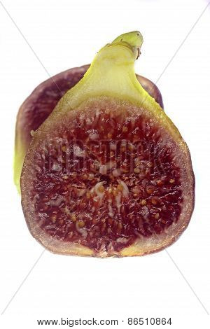 cross section of f. carica, fog fruit