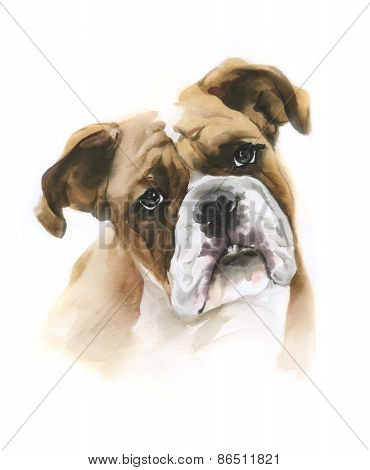 Watercolor Boxer Dog On White Background