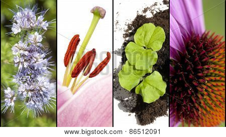 Collage Of Flower Parts In Extreme Closeup