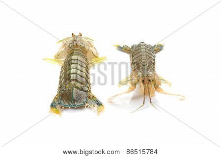 Fresh Mantis Shrimp On A White Background, Closeup Of Photo