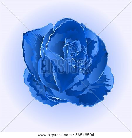 Flower Blue Rose Vector