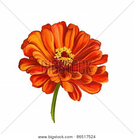 dahlia flower vector illustration  hand drawn  painted