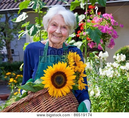 Elderly Woman Carrying Basket With Sunflowers