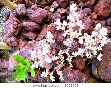 Flowers Bright White Stones Are Very Beautifu