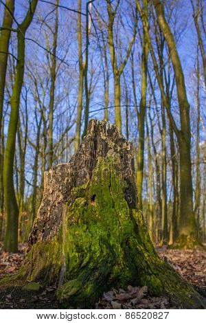 Tree stump covered with moss