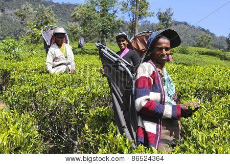 Female Tea Workers, Sri Lanka