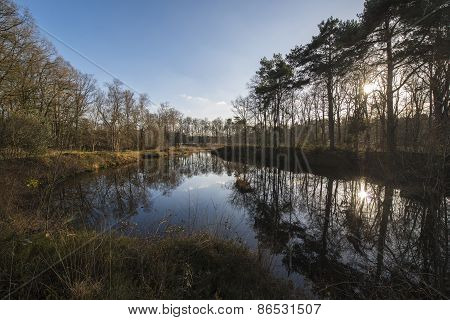 A nature reserve in the Netherlands.