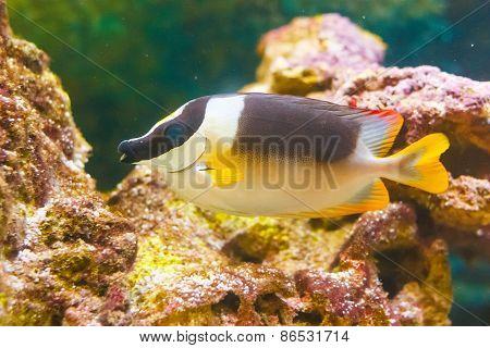 Cute Fish In An Aquarium
