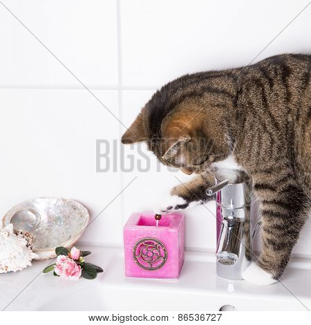 Cat On Washbasin