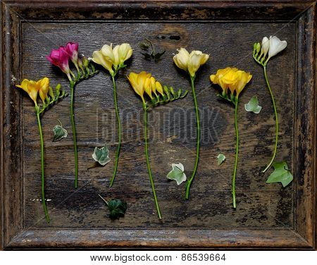 Beautiful  Bouquet  Flowers Freesia