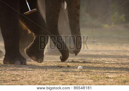 detail on elephant polo game, Bardia, Nepal