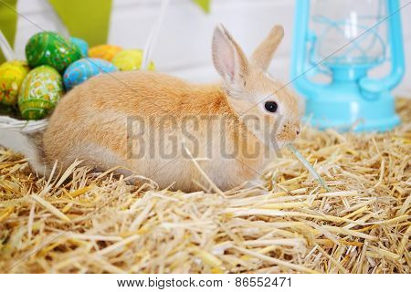 Rabbit On The Hay