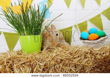 Small Chicken On A Haystack