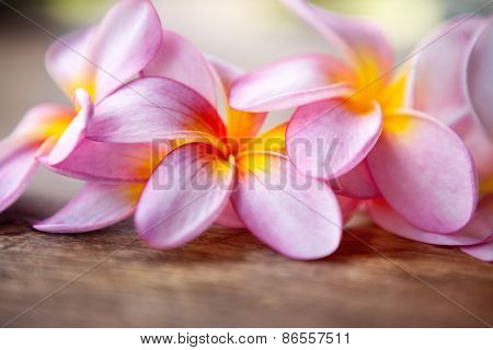 Close up of pink frangipani