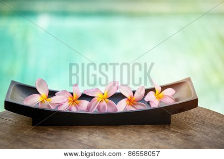 Beautiful tropical frangipani flower over blue background