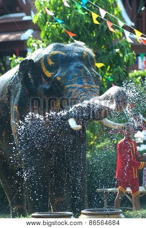 Young Elephant Splashing Water.