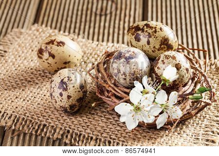 Quail eggs in the nest closeup
