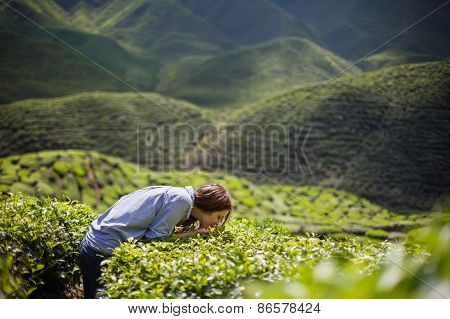 Woman Smelling Tea Leaves