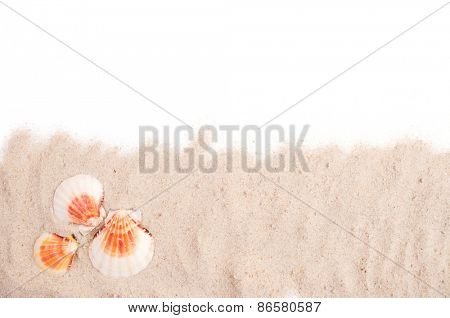 Seashell on the sand and white copy space
