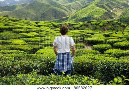 Young Man On Tea Plantation