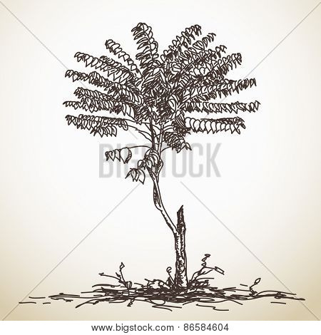 Sketch of small tree, Hand drawn Vector illustration