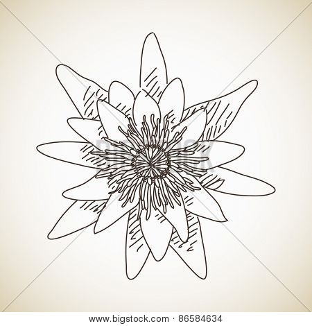 Sketch of flower lotus, Hand drawn Vector illustration
