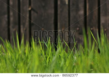 Spring  Grass Over Wood Fence