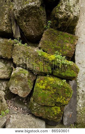stone limestone overgrown with moss