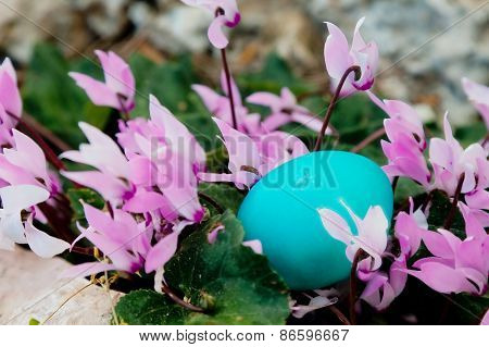 Mint Color Egg Hidden In A Bunch Of Cyclamen Flowers