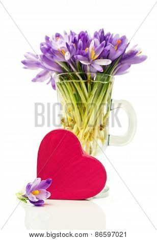 Purple Crocuses In A Glass And Pink Gift Box In Heart Shape