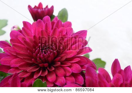 Purple Flower For Background Or Texture