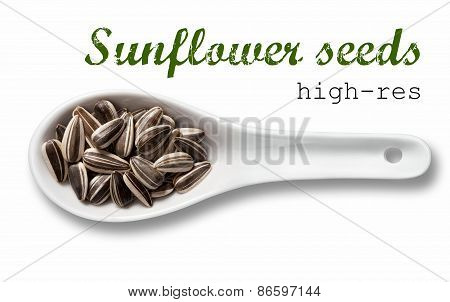 Sunflower Seeds In White Porcelain Spoon / High Resolution Product Photography Of Seed In White